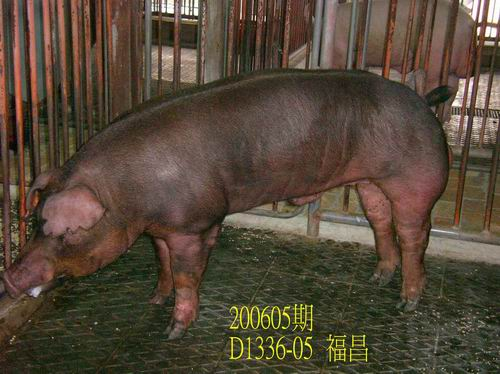 中央畜產會200605期D1336-05拍賣相片