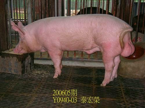 中央畜產會200605期Y0940-03拍賣相片