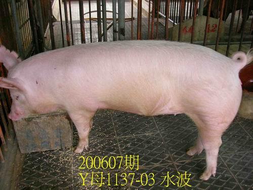 中央畜產會200607期Y1137-03拍賣相片