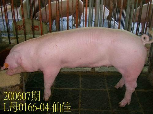 中央畜產會200607期L0166-04拍賣相片