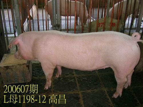 中央畜產會200607期L1198-12拍賣相片