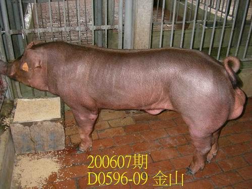 中央畜產會200607期D0596-09拍賣相片