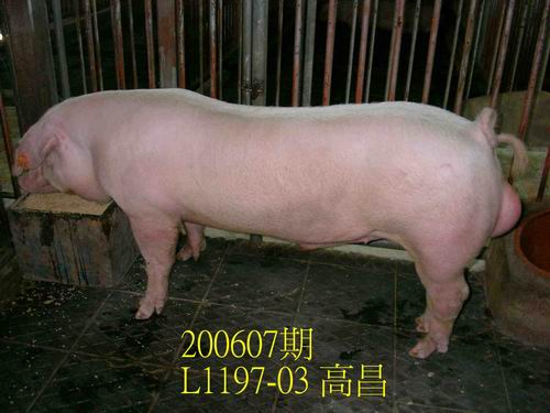 中央畜產會200607期L1197-03拍賣相片