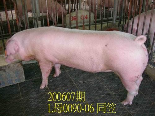 中央畜產會200607期L0090-06拍賣相片