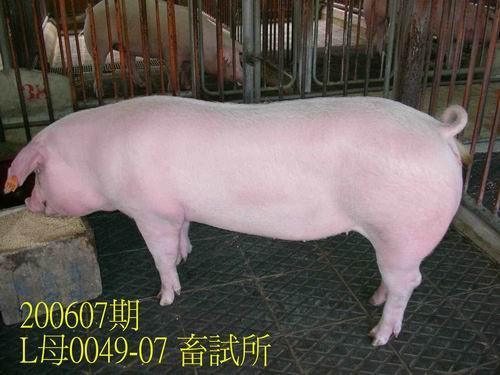 中央畜產會200607期L0049-07拍賣相片