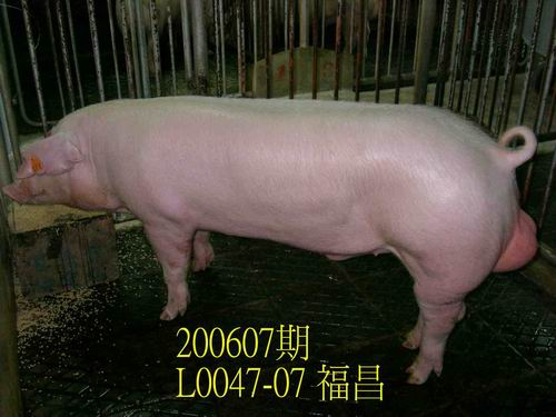 中央畜產會200607期L0047-07拍賣相片