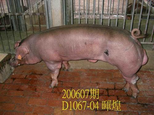 中央畜產會200607期D1067-04拍賣相片