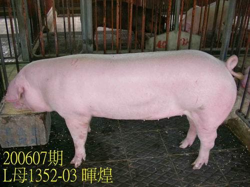 中央畜產會200607期L1352-03拍賣相片
