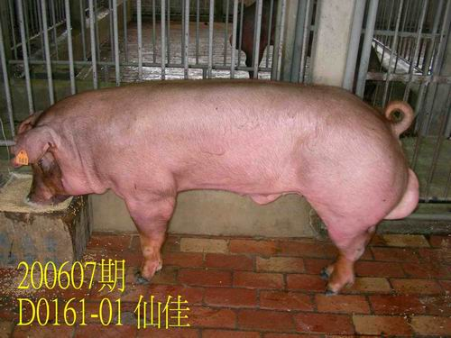 中央畜產會200607期D0161-01拍賣相片