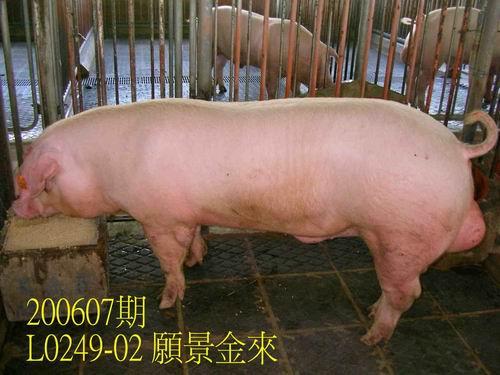 中央畜產會200607期L0249-02拍賣相片