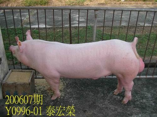 中央畜產會200607期Y0996-01拍賣相片
