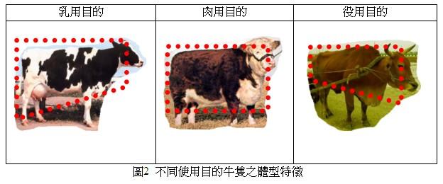 不同使用目的牛隻之體型特徵