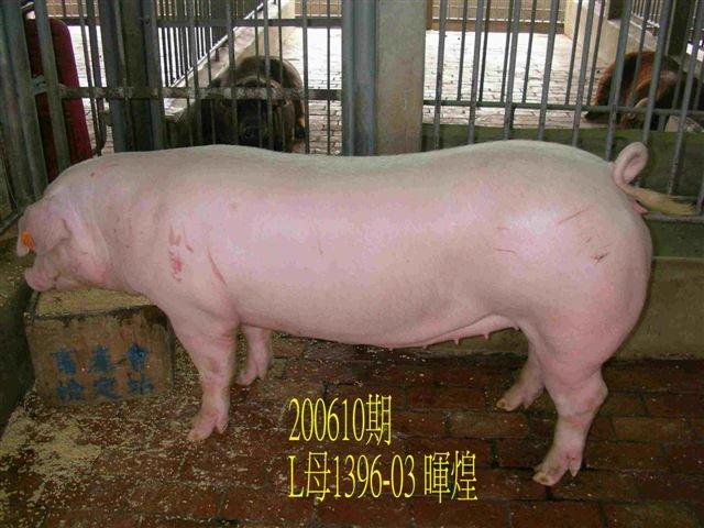 中央畜產會200610期L1396-03拍賣相片