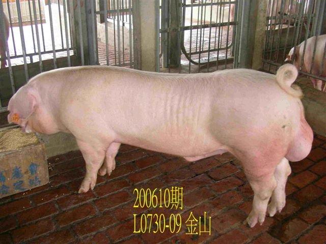 中央畜產會200610期L0730-09拍賣相片