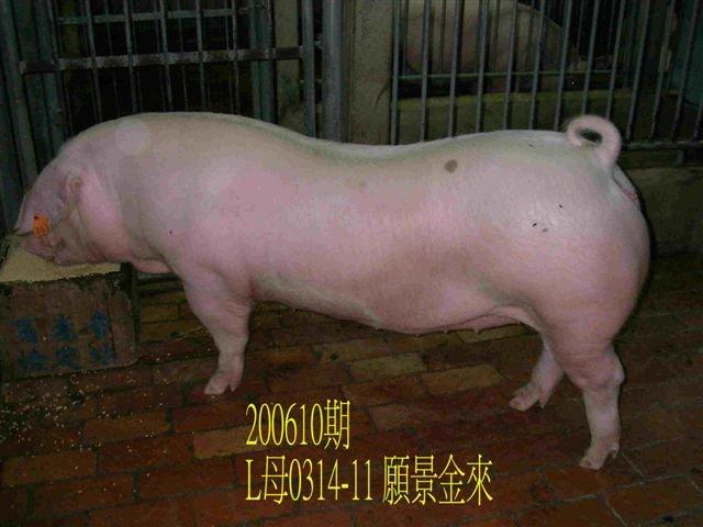 中央畜產會200610期L0314-11拍賣相片