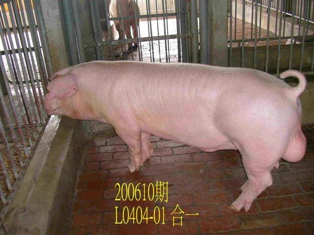 中央畜產會200610期L0404-01拍賣相片