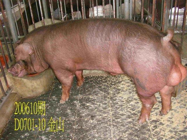中央畜產會200610期D0701-10拍賣相片