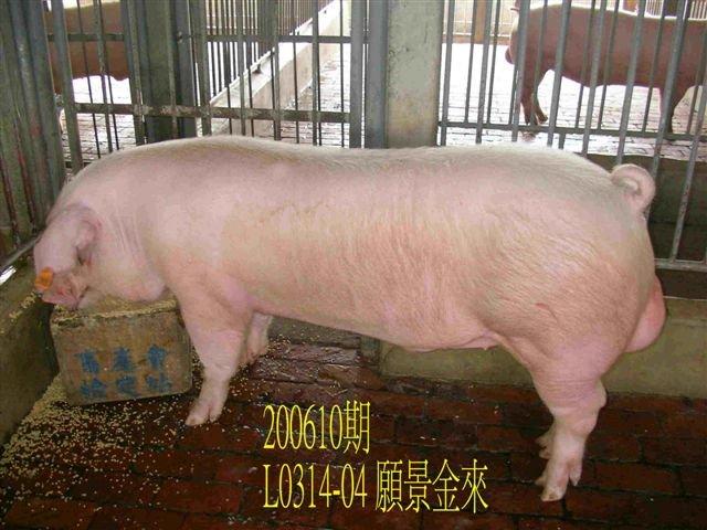中央畜產會200610期L0314-04拍賣相片