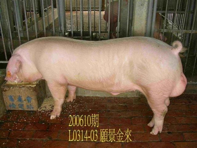 中央畜產會200610期L0314-03拍賣相片
