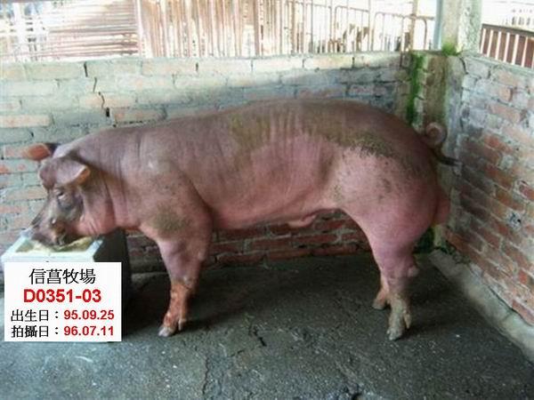 台灣種豬發展協會9605期D0351-03側面相片