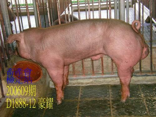 中央畜產會200609期D1888-12拍賣照片