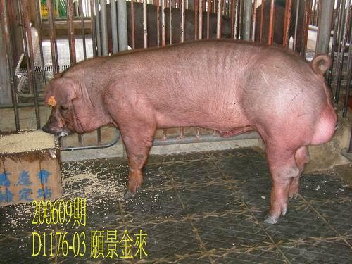 中央畜產會200609期D1176-03拍賣照片