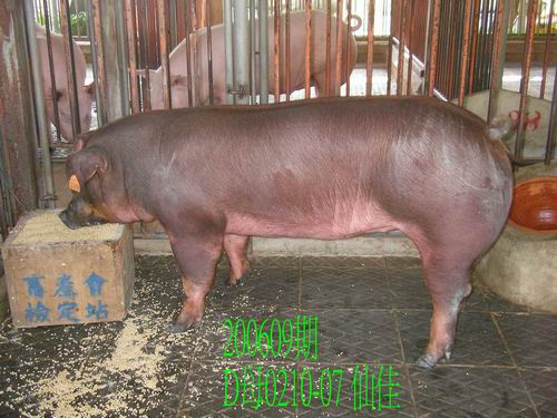中央畜產會200609期D0210-07拍賣照片
