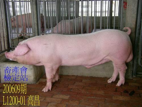 中央畜產會200609期L1200-01拍賣照片