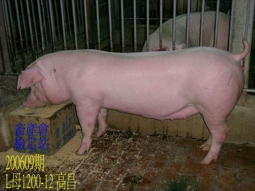 中央畜產會200609期L1200-12拍賣照片