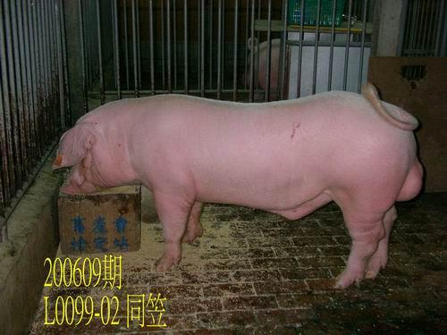 中央畜產會200609期L0099-02拍賣照片