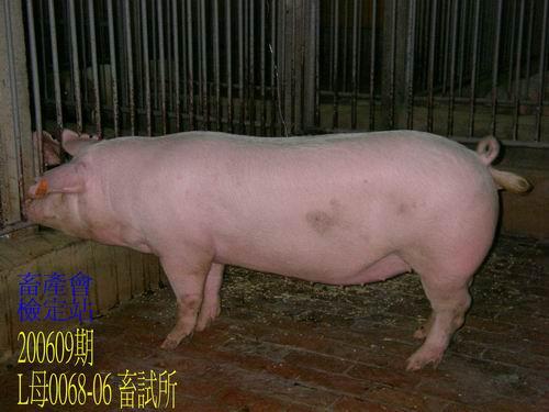 中央畜產會200609期L0068-06拍賣照片