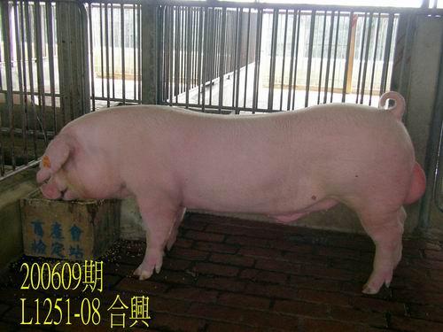 中央畜產會200609期L1251-08拍賣照片