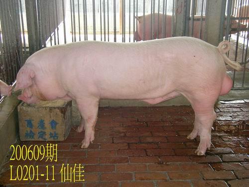 中央畜產會200609期L0201-11拍賣照片