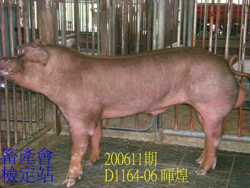 中央畜產會200611期D1164-06拍賣照片