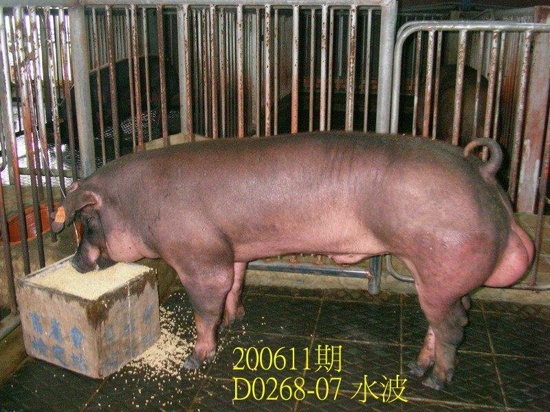 中央畜產會200611期D0268-07拍賣照片