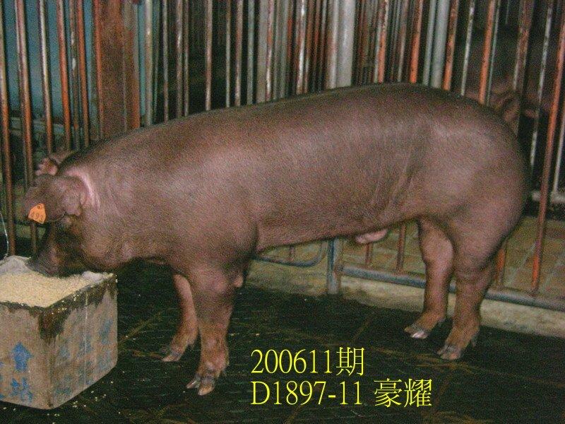 中央畜產會200611期D1897-11拍賣照片