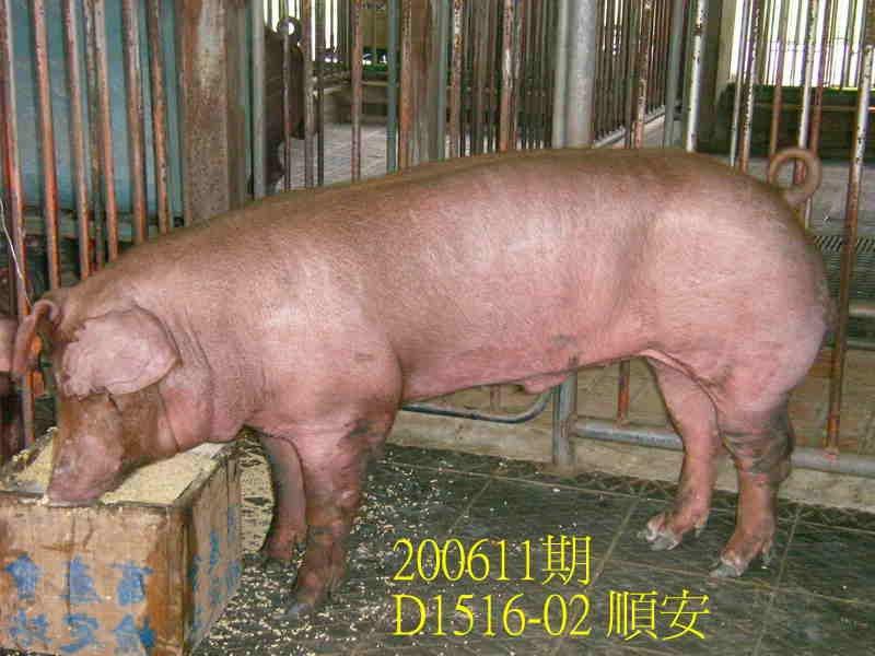 中央畜產會200611期D1516-02拍賣照片