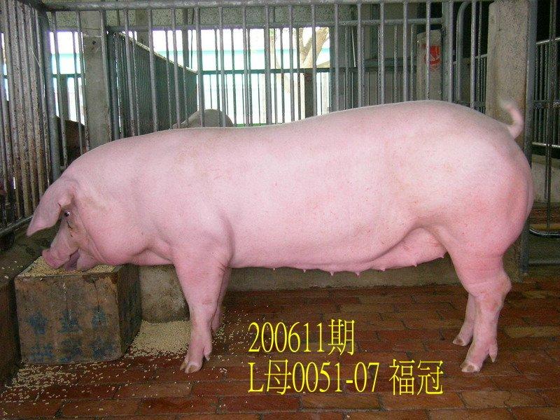 中央畜產會200611期L0051-07拍賣照片