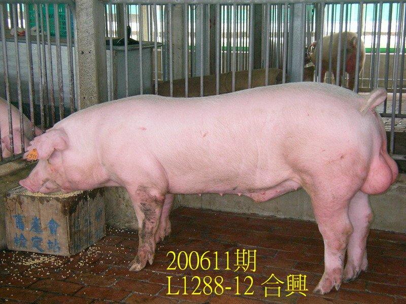 中央畜產會200611期L1288-12拍賣照片