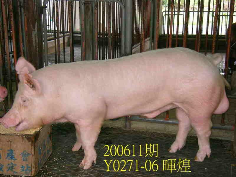 中央畜產會200611期Y0271-06拍賣照片