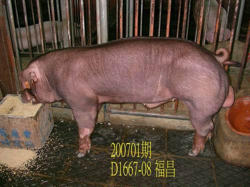 中央畜產會200701期D1667-08拍賣照片