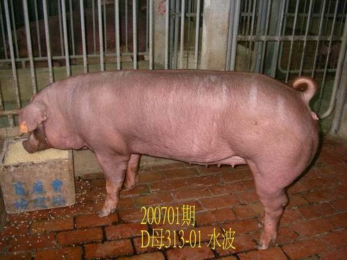 中央畜產會200701期D0313-01拍賣照片