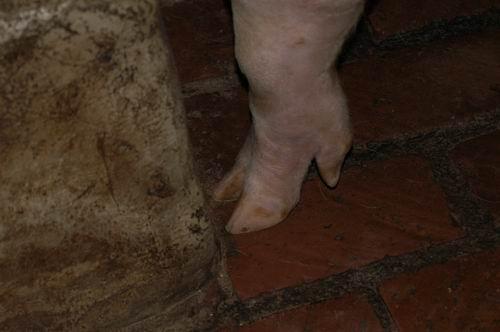 中央畜產會200701期L0123-04體型-四肢相片