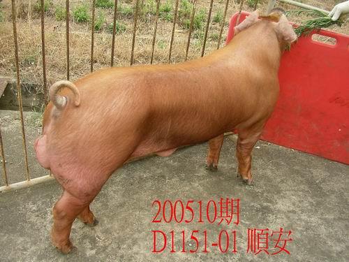 中央畜產會200510期D1151-01拍賣照片
