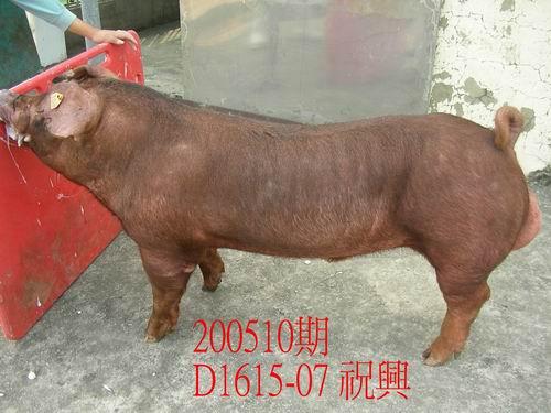 中央畜產會200510期D1615-07拍賣照片
