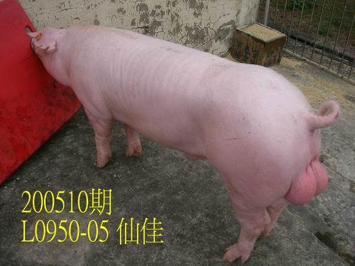 中央畜產會200510期L0950-05拍賣照片