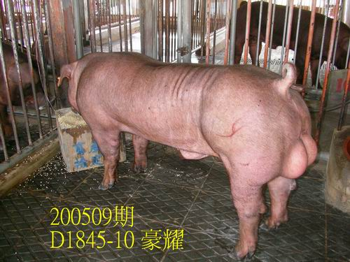 中央畜產會200509期D1845-10拍賣照片
