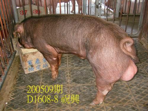 中央畜產會200509期D1608-08拍賣照片