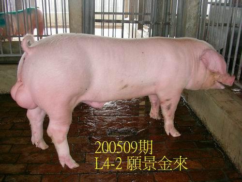 中央畜產會200509期L0004-02拍賣照片