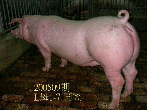 中央畜產會200509期L0001-07拍賣照片